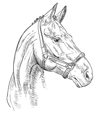 Horse portrait with bridle. Horse head in profile in black color isolated on black background. Vector hand drawing illustration. Retro style portrait of horse in bridle. Illustration