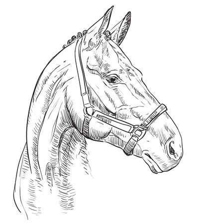 Pferdeporträt mit Zaumzeug. Pferdekopf im Profil in schwarzer Farbe auf schwarzem Hintergrund isoliert. Vektorhandzeichnungsillustration. Retro-Stil-Porträt des Pferdes im Zaumzeug.