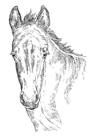Cute pony foal portrait. Young pony head in black color isolated on white background. Vector hand drawing illustration. Retro style portrait of pony foal.