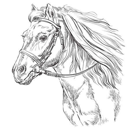 Horse portrait with bridle. Horse head with long mane in profile in black color isolated on white background. Vector hand drawing illustration. Retro style portrait of running horse.