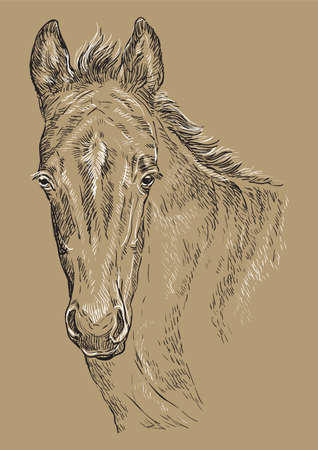 Cute pony foal portrait. Young pony head in black and white colors isolated on beige background. Vector hand drawing illustration. Retro style portrait of pony foal. Illustration