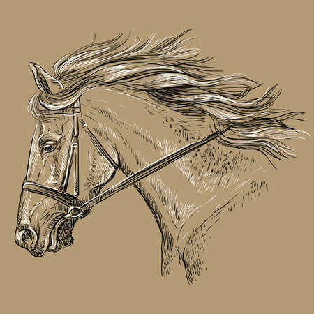 Horse portrait with bridle. Beautiful horse head with long mane in profile in black and white colors isolated on beige background. Vector hand drawing illustration. Retro style portrait of running horse.