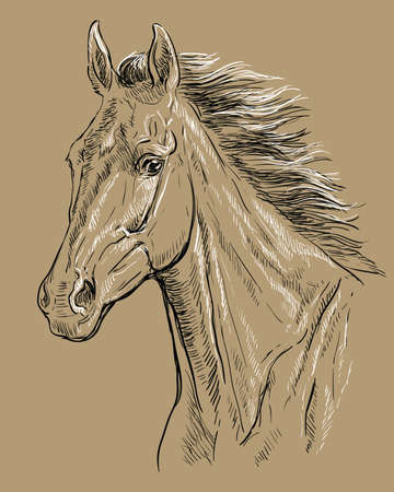 Hand drawing horse portrait. Horse head with long mane in black and white colors isolated on beige background. Vector hand drawing illustration. Retro style portrait of running horse.