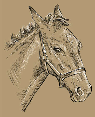 Foal portrait with halter. Young horse head in profile black and white colors isolated on beige background. Vector hand drawing illustration. Retro style portrait of horse. Illustration