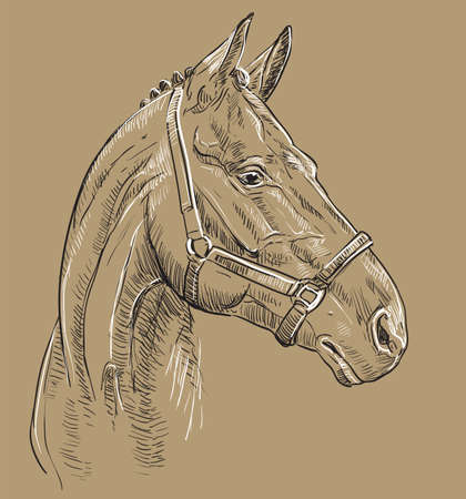 Horse portrait with bridle. Horse head in profile in black and white colors isolated on beige background. Vector hand drawing illustration. Retro style portrait of horse in bridle.