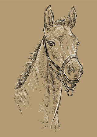 Foal portrait with halter. Horse head in black and white colors isolated on beige background. Vector hand drawing illustration. Retro style portrait of horse. Illustration