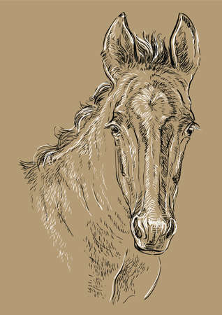 Cute pony foal portrait. Young pony head in black and white colors isolated on beige background. Vector hand drawing illustration. Retro style portrait of pony.