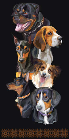 Vertical postcard with dogs of different breeds. Colorful vector realistic illustration of dog portraits:Rottweiler, Beagle,Miniature Pinscher isolated on black background. Art for designe, banner and cards.