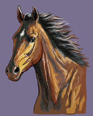 Colorful hand drawing horse portrait. Bay horse head with long mane isolated on purple background. Colorful  vector hand drawing illustration. Retro style portrait of running horse.