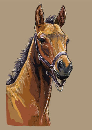 Colorful bay foal portrait with halter. Horse head isolated on beige background. Vector hand drawing illustration. Retro style portrait of horse. Иллюстрация