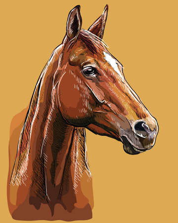 Colorful hand drawing horse portrait. Horse head in profile isolated on beige background. Vector hand drawing illustration. Retro style portrait of bay horse. Illustration