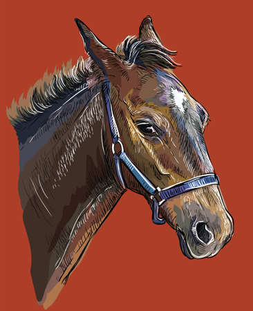 Colorful foal portrait with halter. Young horse head in profile isolated on red background. Vector hand drawing illustration. Retro style portrait of horse.