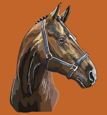 Colorful horse portrait with bridle. Horse head in profile isolated on brown background. Vector hand drawing illustration. Retro style portrait of horse in bridle. Illustration