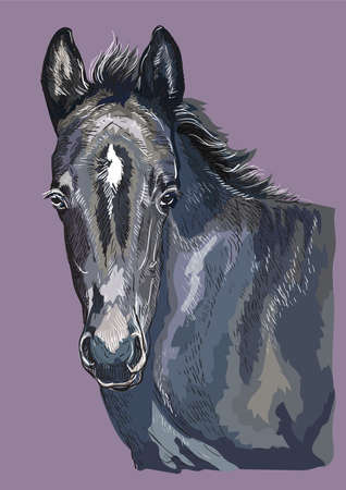 Colorful cute pony foal portrait. Young pony head isolated on purple background. Vector hand drawing illustration. Retro style portrait of pony foal. Illustration
