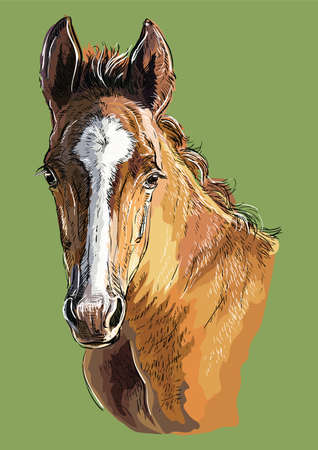 Colorful cute pony foal portrait. Young pony head  isolated on green background. Vector hand drawing illustration. Retro style portrait of pony.