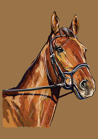 Colorful horse portrait with bridle. Chestnut horse head isolated on brown background. Vector hand drawing illustration. Retro style portrait of horse.