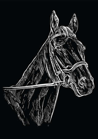 Horse portrait with bridle. Horse head in white color isolated on black background. Vector hand drawing illustration. Retro style portrait of horse.
