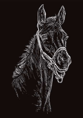 Foal portrait with halter. Horse head in white color isolated on black background. Vector hand drawing illustration. Retro style portrait of foal.