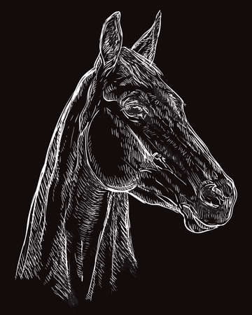 Hand drawing horse portrait. Horse head in profile in white color isolated on black  background. Vector hand drawing illustration. Retro style portrait of horse. Illustration