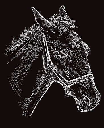 Foal portrait with halter. Young horse head in profile white color isolated on black background. Vector hand drawing illustration. Retro style portrait of horse. Illustration