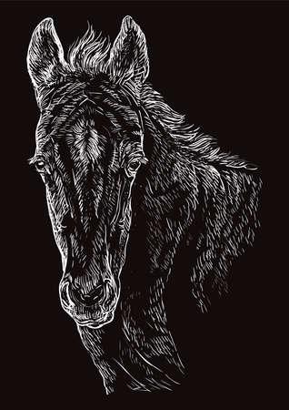 Cute pony foal portrait. Young pony head in white color isolated on black background. Vector hand drawing illustration. Retro style portrait of pony foal.