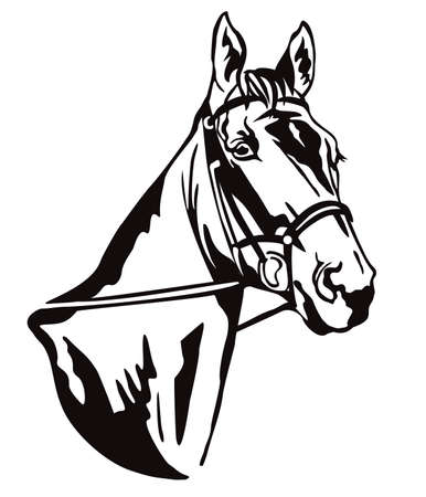Decorative monochrome contour portrait of beautiful racehorse in bridle looking in profile, vector illustration in black color isolated on white background. Image for logo, design and tattoo.