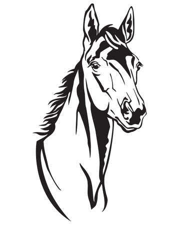 Decorative monochrome contour portrait of beautiful foal looking in profile, vector illustration in black color isolated on white background. Image for logo, design and tattoo. 向量圖像