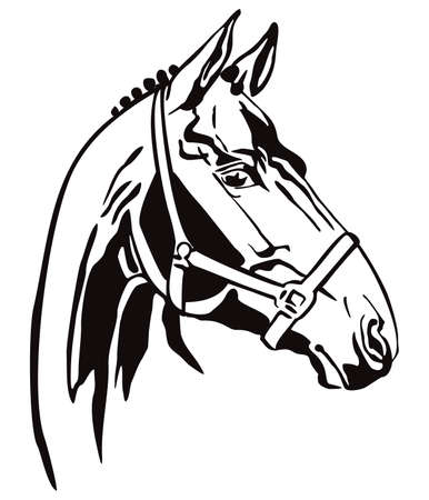 Decorative monochrome contour portrait of racehorse in bridle looking in profile, vector illustration in black color isolated on white background. Image for logo, design and tattoo.