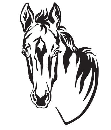 Decorative monochrome contour portrait of pretty foal, vector illustration in black color isolated on white background. Image for logo, design and tattoo. Stock Vector - 136315710