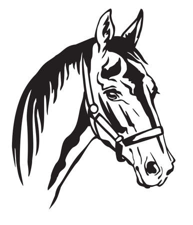 Decorative monochrome contour portrait of beautiful horse in halter looking in profile, vector illustration in black color isolated on white background. Image for logo, design and tattoo.