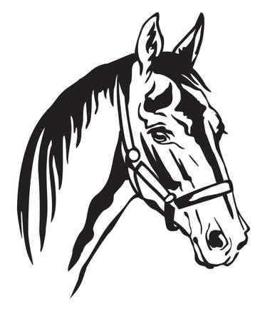 Dekoratives monochromes Konturporträt des schönen Pferdes im Halfter, das im Profil schaut, Vektorillustration in der schwarzen Farbe lokalisiert auf weißem Hintergrund. Bild für Logo, Design und Tätowierung.