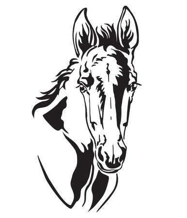 Decorative monochrome contour portrait of pretty foal, vector illustration in black color isolated on white background. Image for logo, design and tattoo. Logo