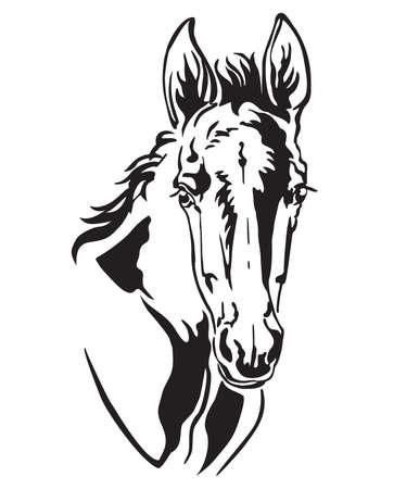 Portrait de contour monochrome décoratif de joli poulain, illustration vectorielle en couleur noire isolée sur fond blanc. Image pour le logo, le design et le tatouage. Logo