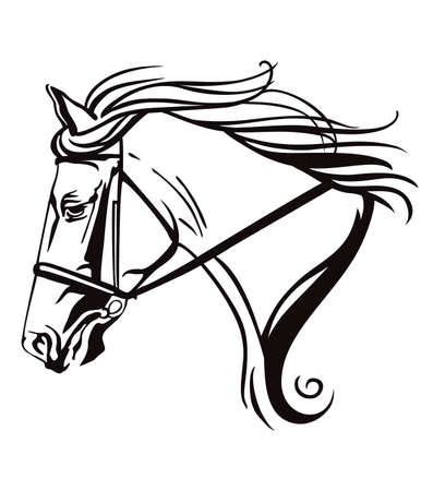 Decorative monochrome contour portrait of beautiful ornamental racehorse in bridle looking in profile, vector illustration in black color isolated on white background. Image for logo, design and tattoo. Illustration