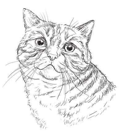Vector hand drawing portrait of cat in black color. Monochrome realistic retro portrait of cat. Vector vintage illustration isolated on white background. Image good for design, cards and tattoo.