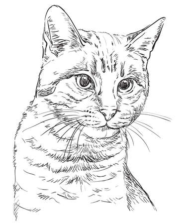 Monochrome vector hand drawing portrait of cat in black color isolated on white background. Realistic retro portrait of cat. Vector vintage illustration of cat. Image good for design, cards and tattoo.  向量圖像