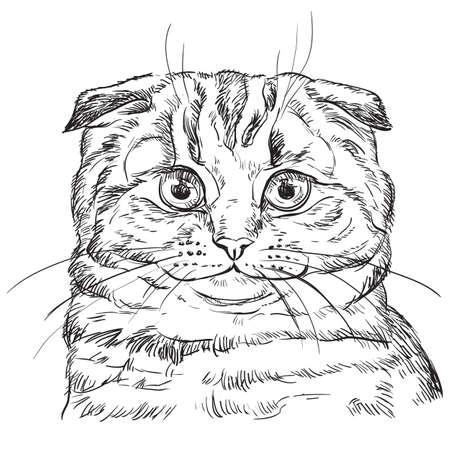 Mano de vector dibujo retrato de gato scottish fold en color negro aislado sobre fondo blanco. Retrato realista monocromo de gato. Ilustración de vector de gato esponjoso. Imagen de diseño, tarjetas. Ilustración de vector