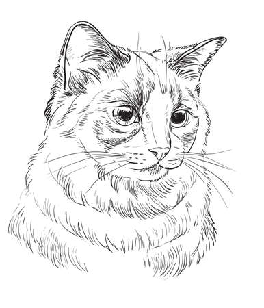 Vector hand drawing portrait of ragdoll cat in black color. Monochrome realistic retro portrait of cat. Vector vintage illustration isolated on white background.Image good for design, cards and tattoo.