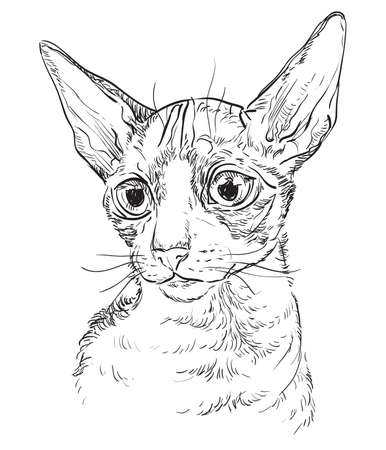 Vector hand drawing portrait of Cornish Rex cat in black color isolated on white background. Monochrome realistic portrait of cat. Vector illustration of cat. Image for design, cards.