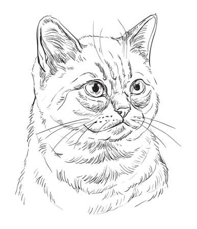 Vector hand drawing portrait of British cat in black color isolated on white background. Monochrome realistic portrait of cat. Vector illustration of fluffy cat. Image for design, cards.