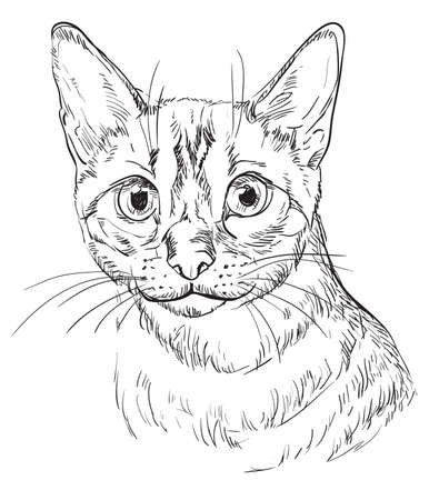 Vector hand drawing portrait of Snow bengal cat in black color isolated on white background. Monochrome realistic portrait of cat. Vector illustration of fluffy cat. Image for design, cards.