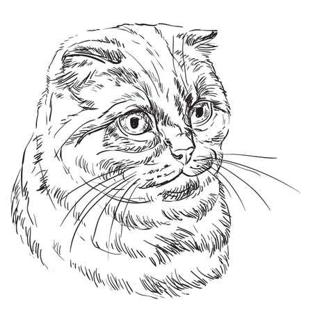 Mano de vector dibujo retrato de gato scottish fold en color negro aislado sobre fondo blanco. Retrato realista monocromo de gato escocés. Ilustración de vector de gato esponjoso. Imagen para diseño, tarjetas.
