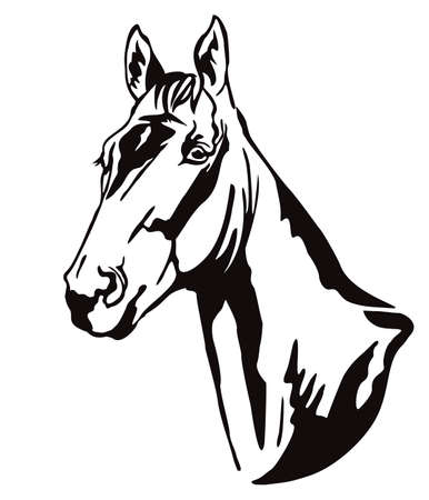 Decorative monochrome contour portrait of beautiful racehorse looking in profile, vector illustration in black color isolated on white background. Ilustração