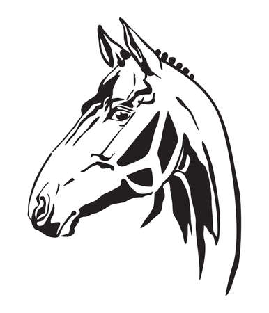 Decorative monochrome contour portrait of racehorse looking in profile, vector illustration in black color isolated on white background.