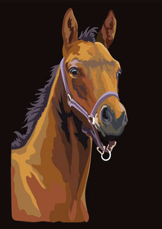 Colorful bay foal portrait with halter. Foal head isolated on black background. Vector drawing  illustration. Retro style portrait of foal.