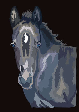 Colorful cute pony foal portrait. Young pony head isolated on black background. Vector drawing illustration. Retro style portrait of pony foal.
