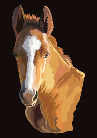 Colorful cute pony foal portrait. Young pony head  isolated on black background. Vector drawing illustration. Retro style portrait of pony.