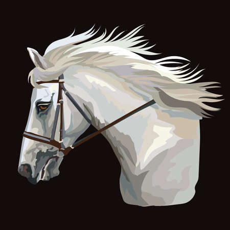 Colorful white horse portrait with bridle. Horse head with long mane in profile isolated on black background. Vector hand illustration. Retro style portrait of running horse. Illustration