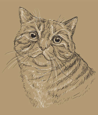 Vector hand drawing portrait of cat in black and white colors. Monochrome realistic retro portrait of cat.  Vector vintage illustration isolated on beige background.Image good for design, cards and tattoo.  Illusztráció