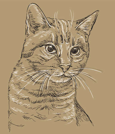 Vector hand drawing portrait of cat in black and white colors isolated on beige background. Monochrome realistic retro portrait of cat. Vector vintage illustration of cat. Image good for design, cards and tattoo.  Çizim